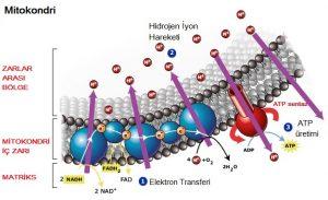 elektron transferi hayatımızın bir çok alanında yer alır.
